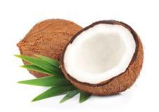 Kokosnuss mit Blättern Lizenzfreies Stockfoto