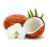 Kokosnuss mit Blättern und weißer Blume Stockfoto