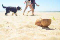 Kokosnuss mit Getränk auf dem Strand mit Mann, Frau und Hund auf Hintergrund Lizenzfreies Stockfoto
