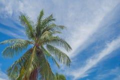 Kokosnuss mit Himmelblau Stockbild