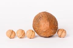 Kokosnuss und vier Walnüsse stockbilder