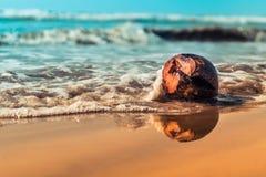Kokosnuss neben Wasser und Sand des Indischen Ozeans Stockbilder