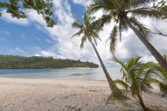 Kokosnuss-Palme über tropischem weißem Sandstrand Lizenzfreie Stockfotos