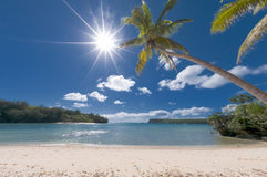 Kokosnuss-Palme über tropischem weißem Sandstrand Stockfotografie