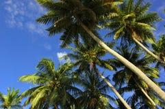 Kokosnuss-Palmen Lizenzfreie Stockfotos