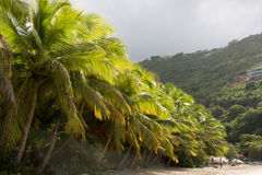 Kokosnuss-Palmen Lizenzfreie Stockbilder