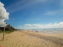 Kokosnuss-Palmen auf weißem sandigem Strand in Porto de Galinhas, Pernambuco, Brasilien stockfoto