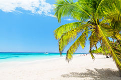 Kokosnuss-Palmen auf weißem sandigem Strand in Punta Cana, dominikanisch lizenzfreie stockbilder