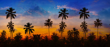 Kokosnuss-Palmen silhouettiert gegen einen Sonnenuntergang-Himmel in Thailand Stockbild