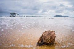 Kokosnuss am Strand stockfoto
