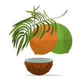 Kokosnuss und Blätter auf weißem Feld Stockbild