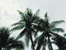 Kokosnuss unter dem Himmel und der Seebrise Thailand lizenzfreies stockbild