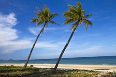 Kokosnuss zwei und blauer Himmel Stockfotos