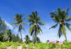 Kokosnussansicht stockfotografie