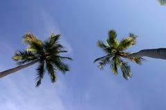 Kokosnussbäume Stockfoto