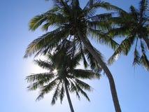 Kokosnussbäume Lizenzfreies Stockbild