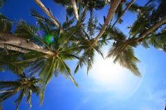 Kokosnussbäume lizenzfreies stockfoto