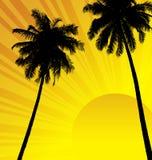 Kokosnussbäume stock abbildung