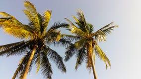 Kokosnussbäume Stockbild