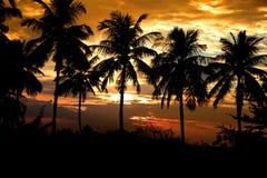 Kokosnussbäume Stockfotos