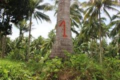 Kokosnussbäume Lizenzfreie Stockfotografie