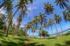 Kokosnussbäume auf Lombok-Insel, Indonesien Lizenzfreie Stockfotos