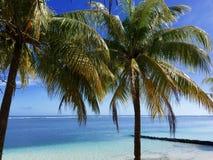 Kokosnussbäume bei Samoa im Pazifischen Ozean lizenzfreies stockbild