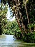 Kokosnussbäume durch Fluss Lizenzfreies Stockfoto