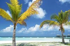 Kokosnussbäume an Maldvies-Strandurlaubsort Stockfotos