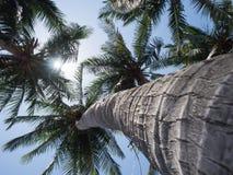 Kokosnussbäume mit hellem Sonnenlicht auf Hintergrund des blauen Himmels Lizenzfreie Stockbilder