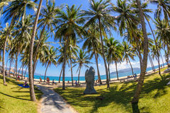 Kokosnussbäume an nha trang setzen in Vietnam 3 auf den Strand Lizenzfreies Stockbild