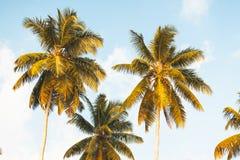 Kokosnussbäume in Seychellen lizenzfreie stockfotos