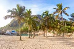 Kokosnussbäume in Tarrafal setzen in Santiago-Insel in Kap-Verde auf den Strand Stockbilder
