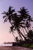 Kokosnussb?ume am Sonnenuntergang lizenzfreie stockbilder
