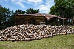 Kokosnussbauernhof in der Dominikanischen Republik: Berg von Kokosn?ssen stockbild