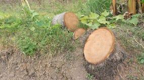 Kokosnussbauholz Stockfotografie