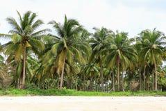 Kokosnussbaum auf dem Strand stockfotos