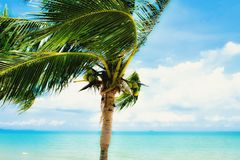 Kokosnussbaum auf dem Strand Lizenzfreie Stockbilder