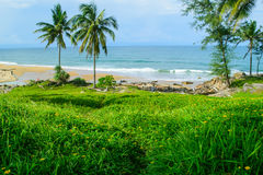 Kokosnussbaum auf Garten lizenzfreies stockfoto