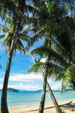 Kokosnussbaum auf Strand lizenzfreies stockfoto