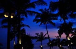 Kokosnussbaum heute Abend lizenzfreies stockfoto
