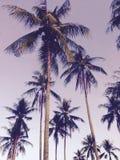 Kokosnussbaum Kunstidee Tapete und Hintergrund Stockbild