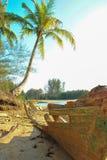 Kokosnussbaum mit Wrack Stockfotos
