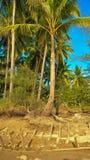 Kokosnussbaum mit Wrack Lizenzfreie Stockfotografie