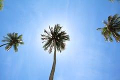 Kokosnussbaum und -himmel Lizenzfreie Stockbilder