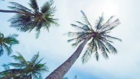 Kokosnussbaum und -sonne stockfotos