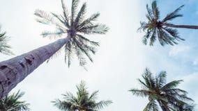 Kokosnussbaum und -sonne stockbild