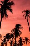 Kokosnussbaum während des Sonnenuntergangs Lizenzfreie Stockfotos