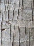 Kokosnussbaumbeschaffenheit oder -hintergrund Lizenzfreies Stockbild