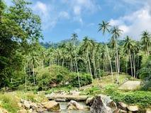 Kokosnussbaumgarten stockfotos